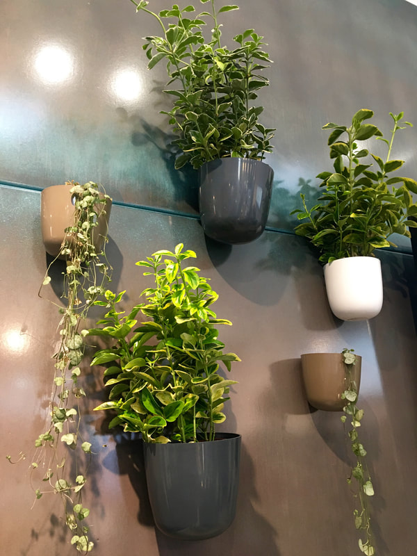 Magnetic plant pots on interior exterior metal clad kitchen wall by value